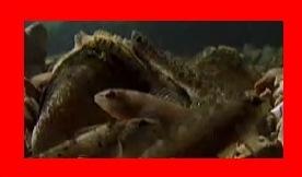 怒り新党,新三大・詐欺師みたいな動物,ランプシリス変身後