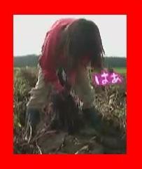 有吉反省会 斉藤美海の禊は農家に就職
